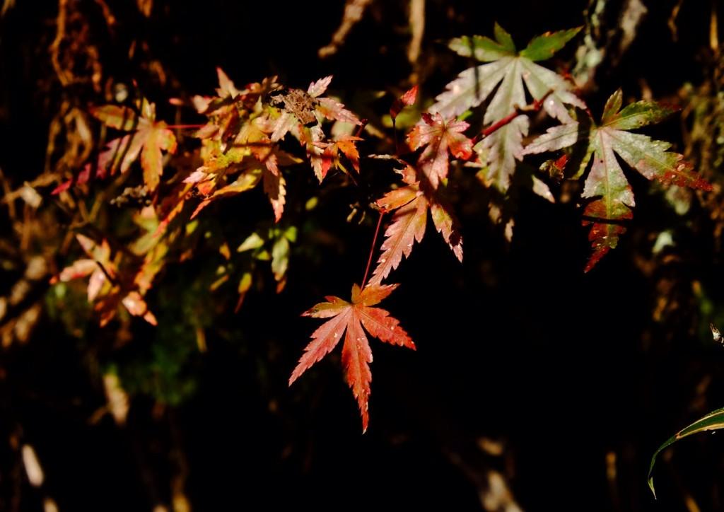 Mount Hiei Koyo 2016